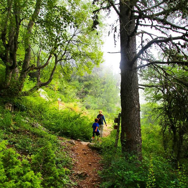 Hike with ProMax in Ehden Forest Reserve this Sunday, December 09. Booking... (Horsh Ehden Nature Reserve)